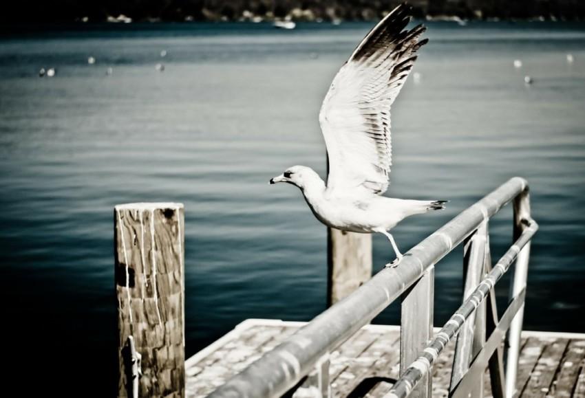 glück finden, starten, loskommen, widerstand überwinden, The Lifepreneurs' Club, Kristin Reinbach, E-Book